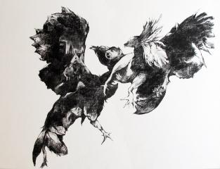 Combat de coqs, fusain sur papier, 70x50 cm, 2013